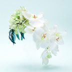 early summer orchid 初夏の蘭 / hl-mgs-002 image01